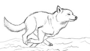 Drawing Wolf Running when You Run Make Sure You Run to something and Not Away From