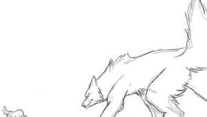 Drawing Wolves Fighting Wolf Fight Animation by Runeme Deviantart Com On Deviantart Art