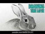 Drawing Wolves Youtube How to Draw A Rabbit Narrated Step by Step Youtube Art