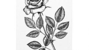 Drawings Of 2 Roses Rose Drawing 2 Magnet Drawing Pinterest Drawings Sketch