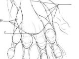 Drawings Of A Hands Drawing Hand andrew Loomis Anatomy In 2019 Pinterest Drawings