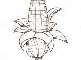 Drawings Of Corn Flower Ear Of Corn Logo Outline Stock Vector A C Filkusto 166191524