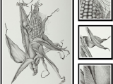 Drawings Of Corn Flower Zea Mays Sweet Corn Sharon Field Botanical Artist Inspiration