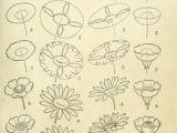 Drawings Of Dying Flowers Die 26 Besten Bilder Von Zeichnen Lernen Drawings Paint Und