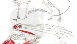 Drawings Of European Dragons European Dragon Anatomy by Pythosblaze Deviantart Com Monsters