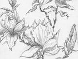 Drawings Of Flower Buds From A Selection Of Henny S Magnolia Drawings and Sketches
