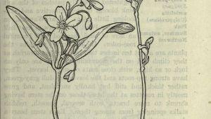 Drawings Of Flower Fields Field Book Of Western Wild Flowers Coloring Flowers Tattoos