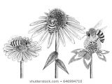 Drawings Of Flowers and Bees 42 870 Bumble Bumble Bee Images Royalty Free Stock Photos On