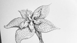 Drawings Of Flowers and Bees Creating Fantasy Flowers for Fun Pencil Drawing Doodle
