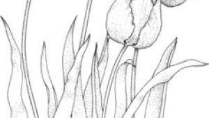 Drawings Of Flowers In A Garden 28 Best Line Drawings Of Flowers Images Flower Designs Drawing