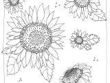 Drawings Of Flowers In Black and White 7 Elegant Black and White Pictures Of Flowers Pictures Best Roses