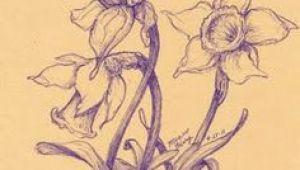 Drawings Of Flowers Market 126 Nejlepa A Ch Obrazka Z Nasta Nky Flowers Drawing Of Daffodil