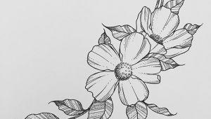 Drawings Of Flowers Pen Wild Flower Wednesdays Rho In 2019 Drawings Art Art Drawings
