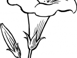 Drawings Of Flowers with Stems Black Outline Drawing Flower White Flowers Free Drawing