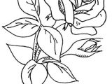 Drawings Of Flowers with Stems Wb Flowers 2 37 My Designs Pinterest Coloring Pages Flower