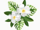 Drawings Of Frangipani Flowers 28 Best Frangipani Images Drawings Draw Fabrics