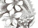 Drawings Of Frangipani Flowers Flowers Drawing Art Tattoos