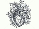 Drawings Of Heart Flower Valentines Day Card Anatomical Heart with Flowers Vector