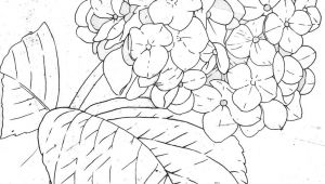 Drawings Of Hydrangea Flowers Hydrangea Line In 2019 Watercolor Painting Embroidery