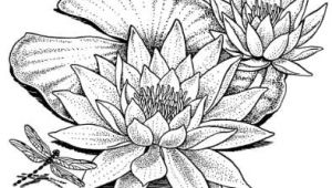 Drawings Of Lilies Flower Water Lily Drawing Wonderous Water Lily Lillies Water Lily