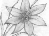 Drawings Of Lily Flowers Credit Spreads In 2019 Drawings Pinterest Pencil Drawings