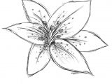 Drawings Of Lily Flowers Image Result for Sketch Lily Flower Craft Watercolor Techniques