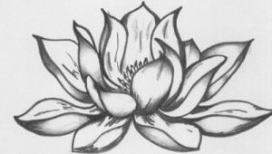 Drawings Of Lotus Flowers Pictures Lotus Flower Drawing 45×30 Cm A C 2008 by Katarina Svedlund
