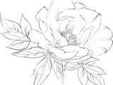 Drawings Of Peonies Flowers 133 Best Peony Drawing Images In 2019 Beautiful Flowers Planting