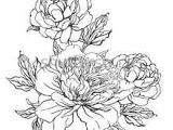 Drawings Of Peonies Flowers Peonies Drawing Google Search Flowers Pinterest Tattoos
