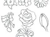 Drawings Of Real Flowers 100 Best How to Draw Tutorials Flowers Images Drawing Techniques
