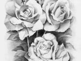 Drawings Of Real Flowers 41 Best Black and White Roses Images Pencil Drawings Paintings
