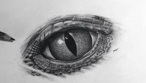 Drawings Of Reptile Eyes New Realistic Eye Reptile Reptileeye Art Artwork Painting