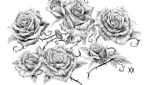 Drawings Of Rose Thorns Image Result for Vine and Thorns Drawings Deck Of Cards Tattoos