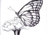 Drawings Of Roses and butterflies Drawings Of Flowers and butterflies My Drawing Of A butterfly by