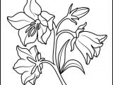 Drawings Of Roses Clipart Best Of Flower Clipart Charte Graphique org
