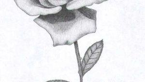 Drawings Of Roses In Pencil Rose Sketch Roses In 2019 Drawings Art Drawings Rose Sketch