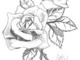 Drawings Of Roses In Pencil Step by Step are You Looking for A Tutorial On How to Draw A Rose Look No
