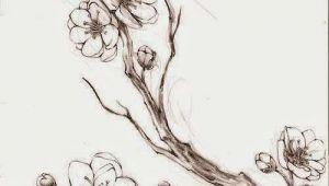 Drawings Of Sakura Flowers 100 Tatuajes De La Flor Del Cerezo O Sakura Dibujos 3 Pinterest