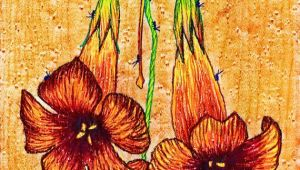 Drawings Of Trumpet Flowers Trumpet Vine Flower Colored Pencil Drawing Etsy