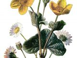 Drawings Of Vintage Flowers Marigold Clip Art Vintage Flower Illustration Yellow Flower