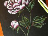 Drawings Of Vintage Flowers Peony Art Peonies Drawing Flower Pencil Art Coloured Pencil