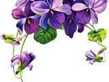 Drawings Of Violets Flowers 16 Best Violet Flower Tattoos Images Violet Flower Tattoos Violet