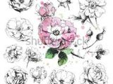 Drawings Of Wild Roses 52 Best Botanical Illustration Images On Pinterest In 2019