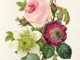Drawings Of Wild Roses Botanical Wonders and Floral Trends Floral Fascination 2