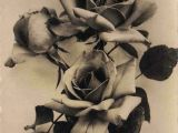 Drawings Of Wild Roses Figuredrawingonli All This is Free to Support Your Efforts In