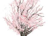 Easy Cherry Blossom Drawing Commission Cherry Tree Blossom Tree Tattoo Cherry
