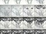 Easy Dick Drawings Easy Realistic Tiger Drawings Tigers Drawing and Painting