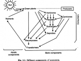 Easy Drawing Of Ecosystem Ecosystem It S Structure and Functions with Diagram