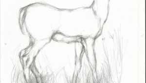 Easy Drawings Deer Pencil Easy Animal Sketch Drawing Drawing Drawings Pencil