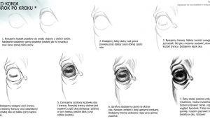 Easy Drawings Eyes Step by Step Horse Eye Animal Reference In 2019 Horse Drawings Drawings